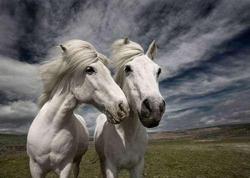 اروع واجمل الخيول في صور horses2.jpg
